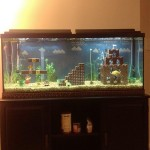 Mario Aquarium 8