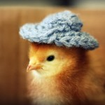 Chicks in Hats 1