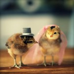 Chicks in Hats 3