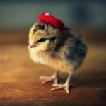 Chicks in Hats 4