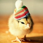 Chicks in Hats 6