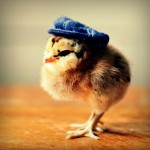Chicks in Hats 7