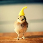 Chicks in Hats 8