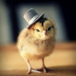 Chicks in Hats 9