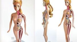 ตุ๊กตาบาร์บี้กับอวัยวะภายในที่คุณต้องอึ้ง
