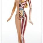 Barbie Anatomy 3