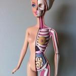 Barbie Anatomy 5