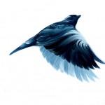 Bird Painting 3