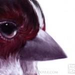 Bird Painting 7