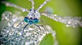 ภาพแมลงกับหยดน้ำค้างในทุกๆ เช้า