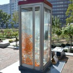 Phone Booth Aquariums 8
