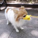 Quack Muzzle 2