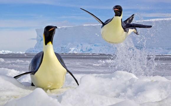 ภาพถ่ายชีวิตสัตว์ยอดเยี่ยมประจำปี 2012