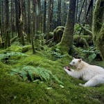 Paul Nicklen Canada Spirit of the forest