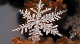 เกล็ดหิมะสวยงามหลายแบบรับหน้าหนาว