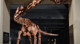 'พาทาโกไททัน' ไดโนเสาร์ใหญ่ที่สุดในโลก