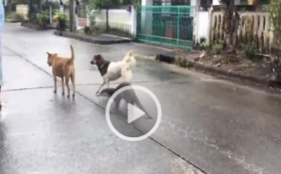 น่ารักอ๊ะ!! ตัวนาก-สุนัข เพื่อนรักต่างสายพันธุ์!!